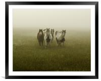 Curiosity, Framed Mounted Print