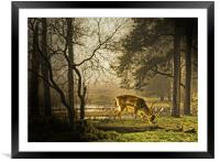 Stepped  into the Light., Framed Mounted Print