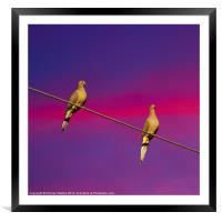 Birds on a Wire, Framed Mounted Print