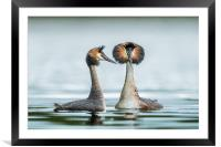 The mating game, Framed Mounted Print
