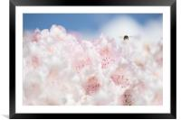 Busy bee , Framed Mounted Print