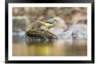 Reflecting beauty, Framed Mounted Print