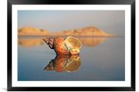 Shell Reflection, Framed Mounted Print