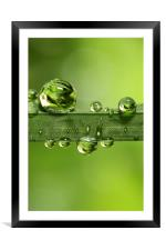 Gloriously Green, Framed Mounted Print