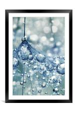 Sparkling Dandy in Blue, Framed Mounted Print