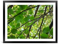 In the Treetops, Framed Mounted Print
