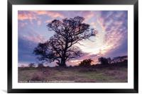 Warmwell Tree, Framed Mounted Print