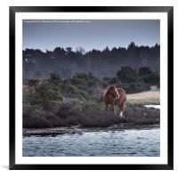New Forest Pony, Framed Mounted Print