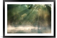 Quest for Holy Quack, Framed Mounted Print