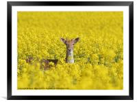 Fallow in Yellow, Framed Mounted Print
