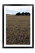 Cornfields, Framed Mounted Print