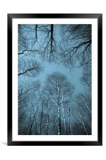 Epping  Forest trees, Framed Mounted Print