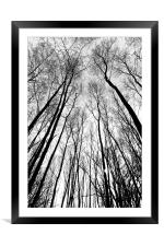 Forest Trees, Framed Mounted Print