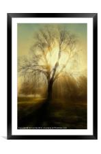 FIRE TREE, Framed Mounted Print