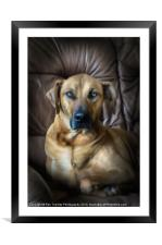 A PROUD PORTRAIT, Framed Mounted Print