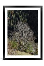 Forest in autumn, Framed Mounted Print