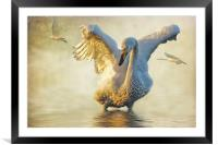 Swans at Sunset, Framed Mounted Print