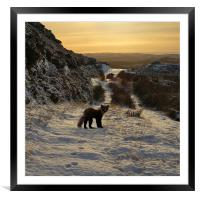 The pine marten's path, Framed Mounted Print
