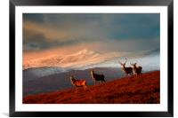Bachelor group of stags, Framed Mounted Print