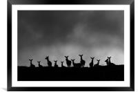 Red Deer on the Hill, Framed Mounted Print
