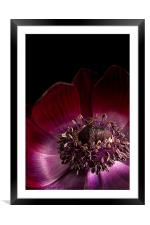 Deep Pink Anemone - 3, Framed Mounted Print