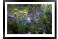 Wild Flowers in France, Framed Mounted Print