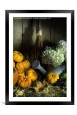 Pumpkins and White Hydrangea 2, Framed Mounted Print