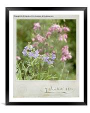 Vintage Country Garden, Framed Mounted Print