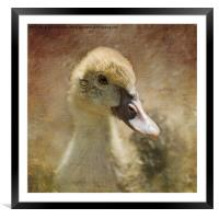 Miss Duck, Framed Mounted Print