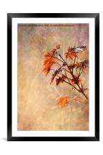 Maple Leaves, Framed Mounted Print