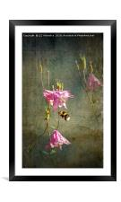 Bee Happy, Framed Mounted Print