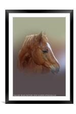 Portrait of a Horse, Framed Mounted Print
