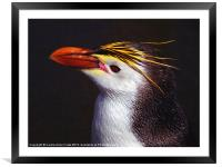 Royal Penguin Portrait, Framed Mounted Print
