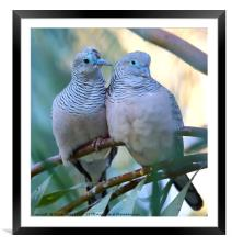 Pair of Peaceful Doves, Framed Mounted Print