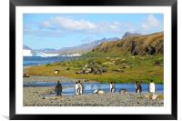 South Georgia in the Southern Atlantic, Framed Mounted Print