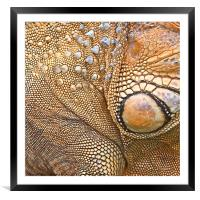 Abstract of Male Green Iguana Skin, Framed Mounted Print