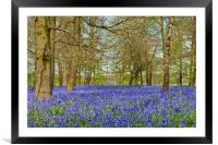 Bluebell Woods Greys Court Oxfordshire, Framed Mounted Print