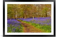 Bluebell Woods Greys Court Oxfordshire UK, Framed Mounted Print