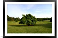 A View From Kenwood House , Framed Mounted Print