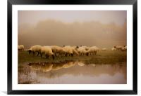 Sheep in the fog, Framed Mounted Print