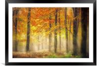 Autumn Gold, Framed Mounted Print