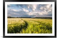 Barley Fields, Framed Mounted Print