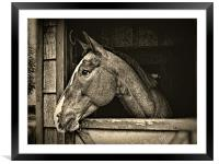 A Horse Of Course - Mono, Framed Mounted Print