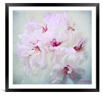 Geranium, Framed Mounted Print