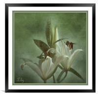 Lily, Framed Mounted Print