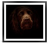 English Cocker Spaniel out of the shadows         , Framed Mounted Print
