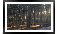 Sunrise in the woods                              , Framed Mounted Print