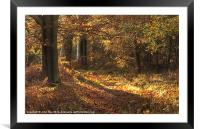 Beautiful woods Cannock, Framed Mounted Print