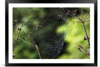 Spiders Web covered in dew, Framed Mounted Print