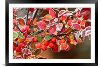 Frosted Berries, Framed Mounted Print